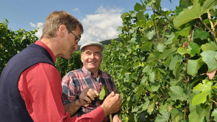 Francois Meyer ist Pionier des biologischen Weinbaus im Elsass