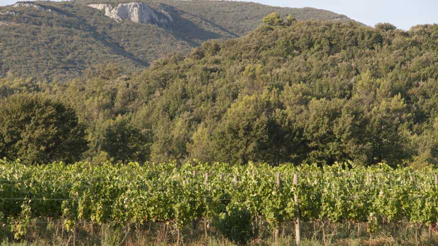 Fruchtbare Provence
