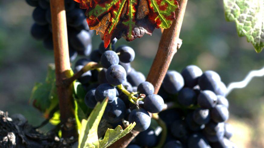Weinbau im Burgund