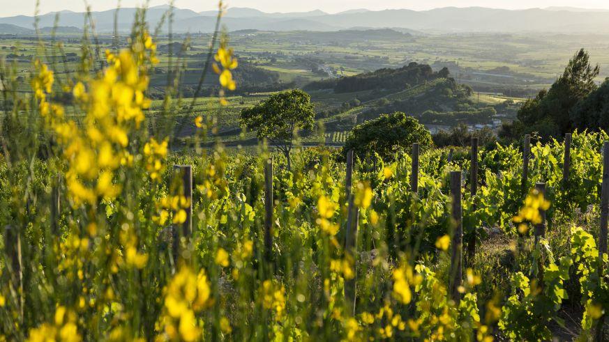 Weinbau in Katalonien