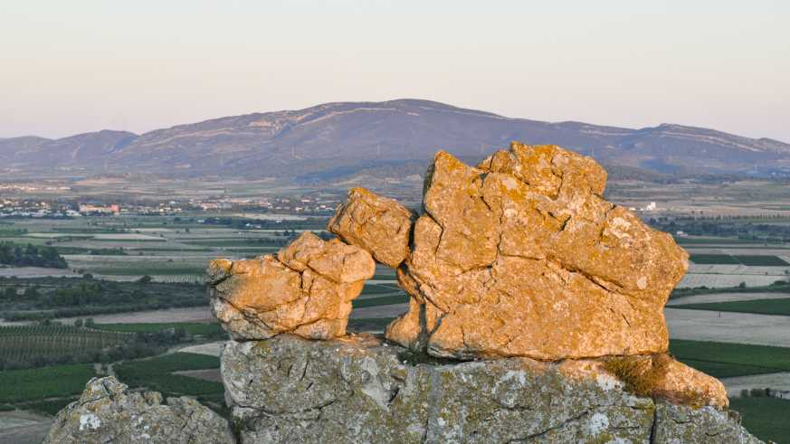 Weinbau im Languedoc
