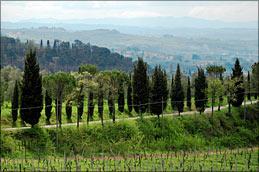 Das riesige San Vito verfügt über unterschiedlichste Kulturen und Ausgleichsflächen. Die Biodiversität ist entsprechend gross.