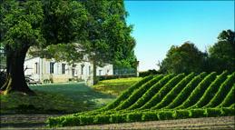 Domaine Elisabeth mit grünen Rebzeilen