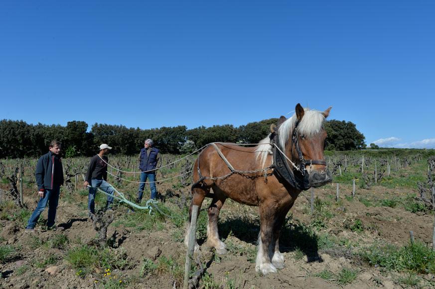 Die Bodenbearbeitung mit dem Pferd ist aufwändig. Aber sie verhindert Bodenverdichtung und Bodenerosion - eine Investition in die Zukunft.