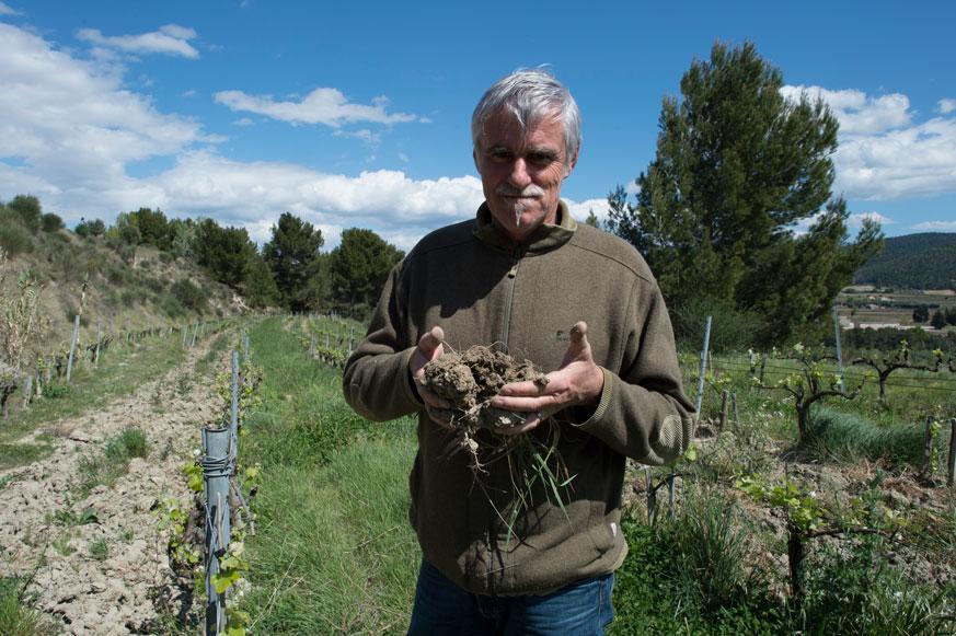 Das Ergebnis guter Begrünung mit Leguminosen: lockere fruchtbare Erde, die Feuchtigkeit zurückhalten kann und reiches Bodenleben ermöglicht.