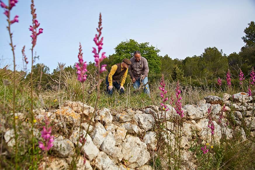 Winzer Josep Maria Albet i Noya (rechts) und David Rodriguez von Delinat in einem Rebberg mit schöner Biodiversität.