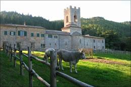 Die fast tausendjährige Klosteranlage Badia a Coltibuono wird heute von der Familie Stucchi-Prinetti als renommiertes Bio-Weingut geführt.