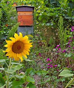 Delinat-Bienenvölker stehen in wilder Natur, weit entfernt von Industrie, Autobahnen und anderen Schadstoffquellen.