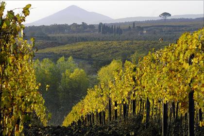 Unweit des Hügelstädtchens Montepulciano erstrecken sich die in die intakte Natur eingebetteten Weinberge von Il Conventino.