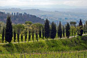 Wein- und Genussreise Toskana