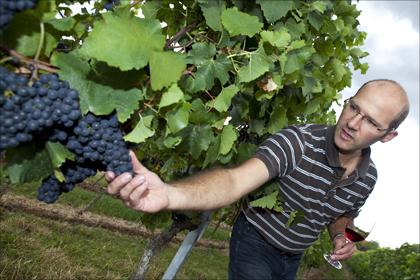 Winzer Tobias Zimmer hat eine Vorliebe für Rotweine.