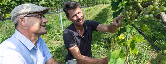 David Rodriguez von Delinat (links) und Winzer Roland Lenz freuen sich an Piwi-Trauben der Sorte Solaris, die praktisch ohne Pflanzenschutzmittel völlig gesund heranreifen.