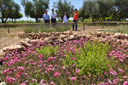 Herrlich duftende Kräutergärten sorgen für willkommene Abwechslung in den Rebbergen von Maggiovini.