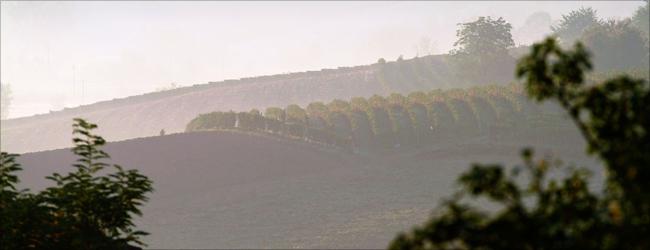 Nomen est omen: Das Piemont mit seinen herbstlichen Morgennebeln ist die Heimat der Nebbiolo-Traube.