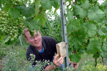Timo Dienhart bereichert seine Weinberge mit Wildkräutern und Insektenhotels.