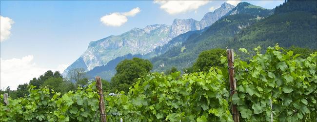 Landschaft im Kanton Genf