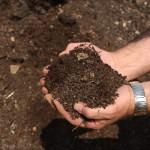 In diese Erde wurde Biokohle eingearbeitet.