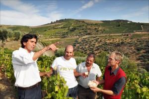 Terrassen-Weinbau am Douro