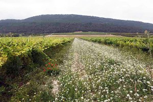 Blumen im Wein