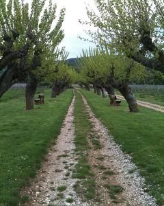 Wein-Urlaub in Südfrankreich