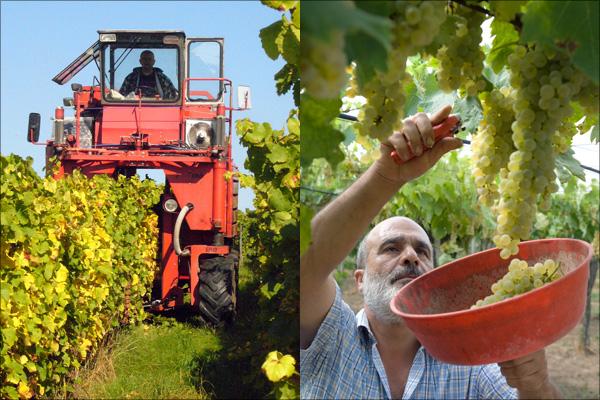 Bildergebnis für Weinlese in Andalusien mit Vollernter