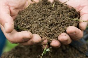 Biologisch aktiver Boden