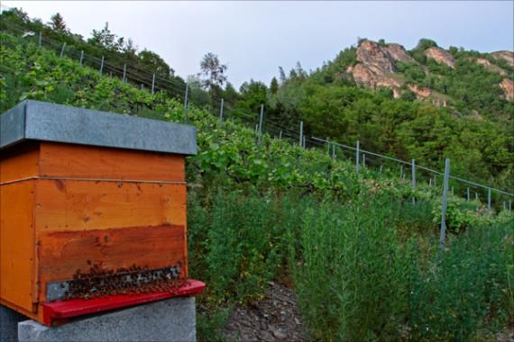 Diese Bienen müssen nicht hungern: In der reichhaltigen Biodiversität der Mythopia-Weinberge gibt es genug Nahrung.