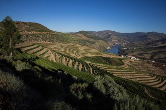 Im Zentrum des Douro-Tales, wo sich an den steilen Hängen beidseits des Flusses Tausende, von Menschenhand gebaute Weinbergterrassen winden.