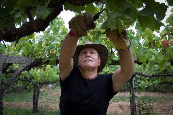 Joaquin Reis in seinem Weinberg