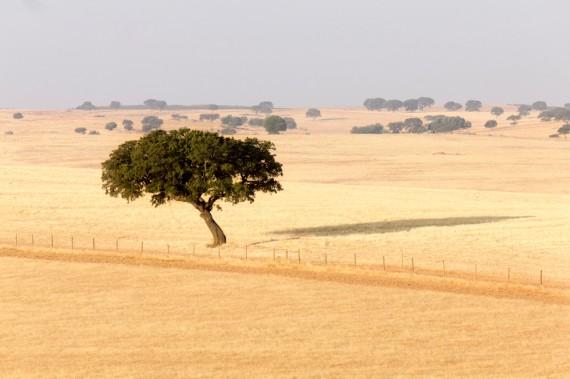 In der Getreidekammer Portugals, Alentejo, wird erst seit rund 30 Jahren im grösseren Stil auch Wein erzeugt.