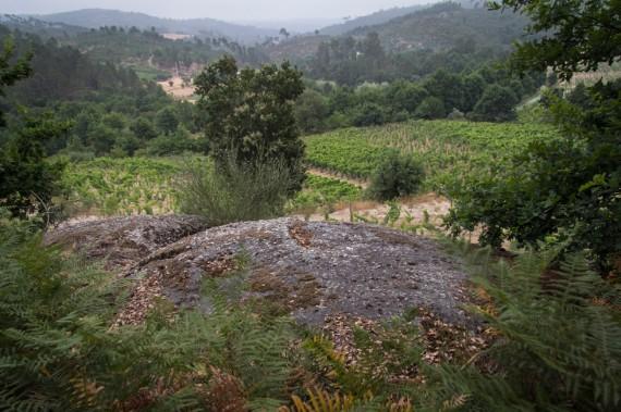 Findling im Weinberg von Casa de Mouraz