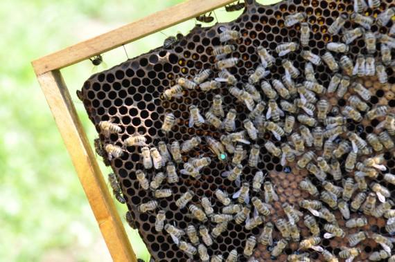 Bienenvölker in Asturien