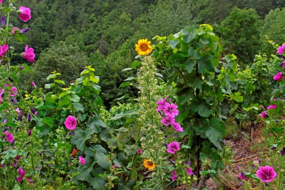 Die Förderung der natürlichen Vielfalt im Weinberg ist eines der zentralen Anliegen des Delinat-Beratungsdienstes.