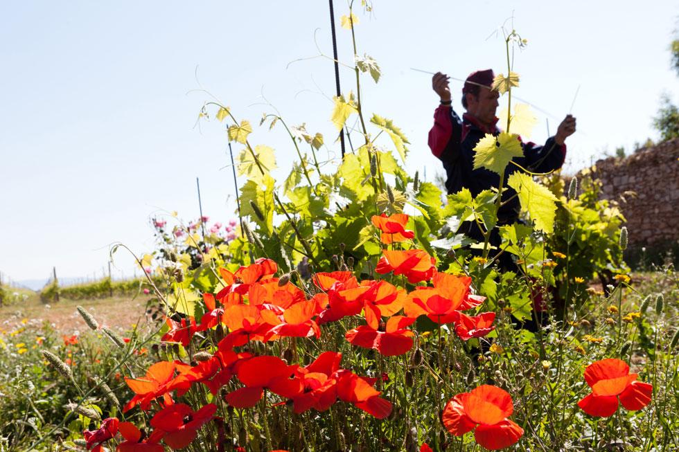 Tummelfeld für Schmetterlinge und Bienen