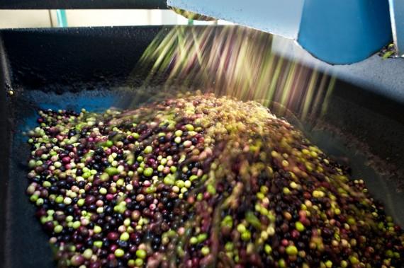 Olivenpresse