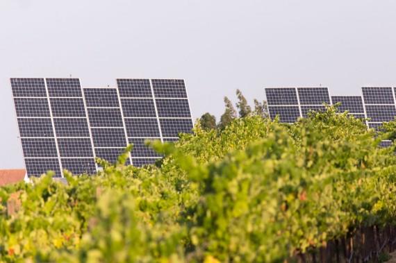 Solaranlage auf dem Weingut