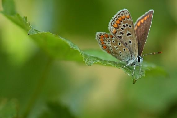 «Schmetterlinge sollen wieder durch die Reben fliegen» - das ist schon seit 1980 das Ziel von Delinat.