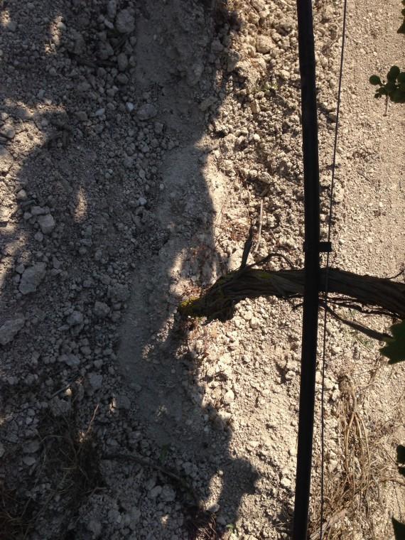 Die Böden der Rebberge von Corrado Gurrieri sind sehr kalkhaltig. Das ergibt Weine mit einer hohen Mineralität.