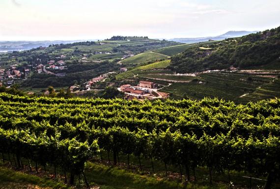 Landschaft im Valpolicella