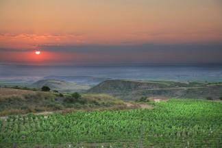 Neuer Weinberg in prachtvoller Landschaft: Die Naturwaldaufforstungen am Rand der Reben sowie die neu gepflanzten Wildsträucher und Bäume im Weinberg Plana de Turras sind von Weitem noch nicht sichtbar