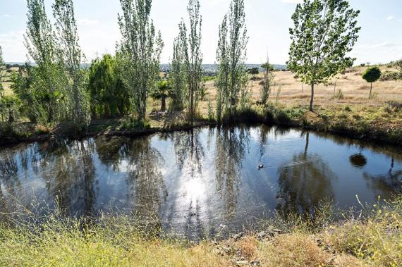 Die ökologischen Ausgleichsflächen müssen auf Delinat-Weingüter neu mindestens 12% betragen.
