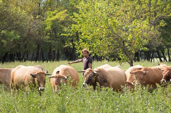 Neben Reben spielen Tiere eine wichtige Rolle auf dem Hof: Lukas Michlits mit Aubrac-Rindern