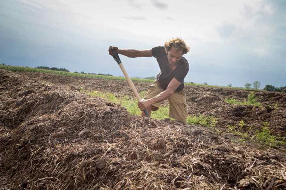Aus dem Mist der Rinder wird Kompost, der im Wein- und im Getreidebau zum Einsatz kommt.