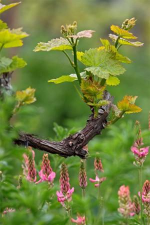 Artenvielfalt im Weinberg