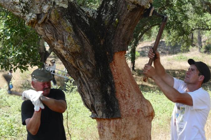 Das Naturprodukt Kork bietet in Portugal über 25 000 Menschen einen Arbeitsplatz