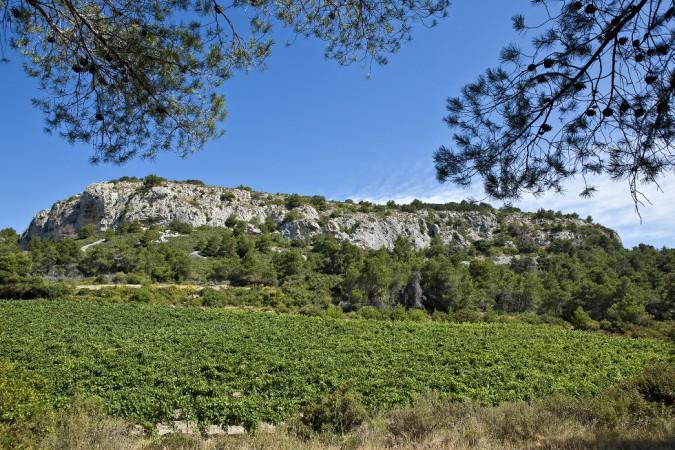 Weinlandschaft im Languedoc