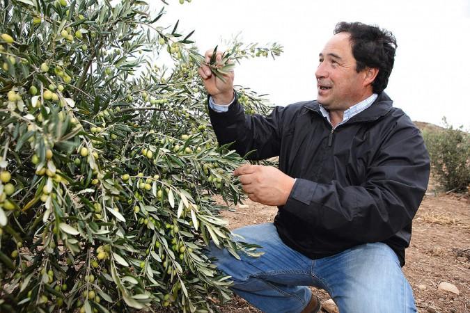 Osoti-Winzer Francisco Ruiz kann neben Trauben auch Oliven ernten.