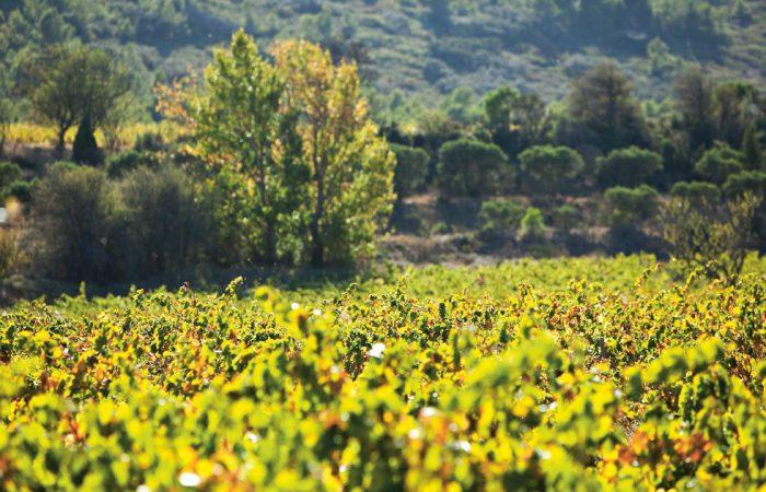 Passion für Wein und Natur