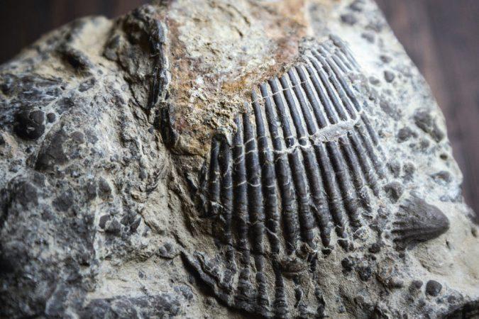 Böden mit Muschelkalk enthalten Spuren, die über Millionen Jahre zurückreichen.
