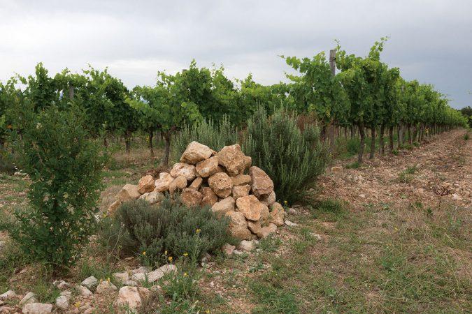 Ökologische Hotspots im Weinberg mit Sträuchern, Steinhaufen und mehr